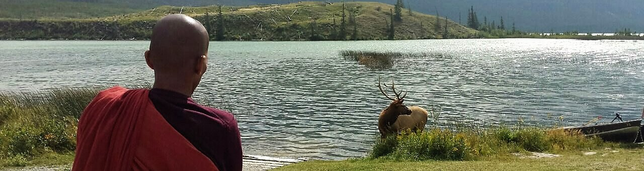 banner-maon-moose